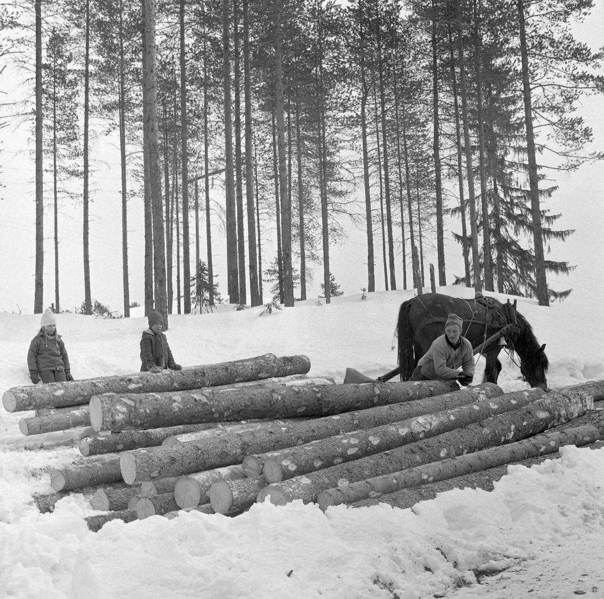Tømmerkjøring med rede hos Per O. Løvberg og sønn. Kjøringen foregikk i nærheten av Nybergsund, Trysil, Hedmark.