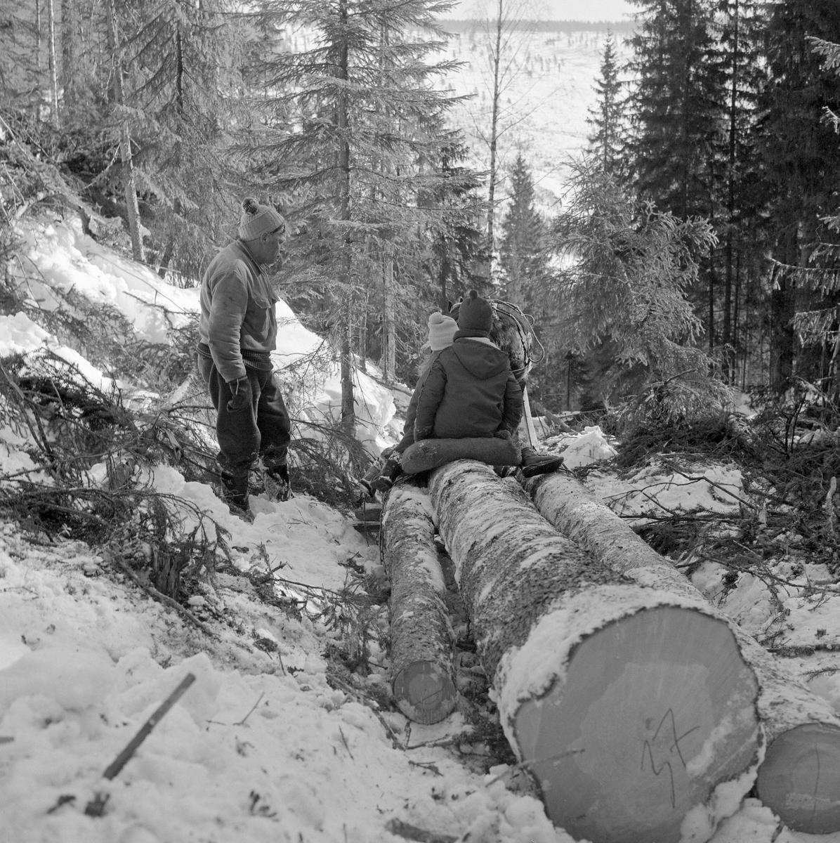 Tømmerkjøring på bukk i Jordet Trysil. Fotografiet er tatt på et sted der tømmervegen gikk i en forsenkning i et terreng med fleraldret granskog, der noen av de groveste trærne var felt. Bildet er tatt fra en posisjon bak et lass med ubarket grantømmer som var bundet fast på en «bukk» (framslede) som ble brukt som stutting under tømmerkjøringa. Trekkdyret var en dølahest. Tømmerkjøreren Ottar Flodberg stod ved siden av lasset, kledd i vadmelsbukser, «islender» (ullgenser) og topplue. På den fremre delen av lasset satt det to barn på en høysekk.