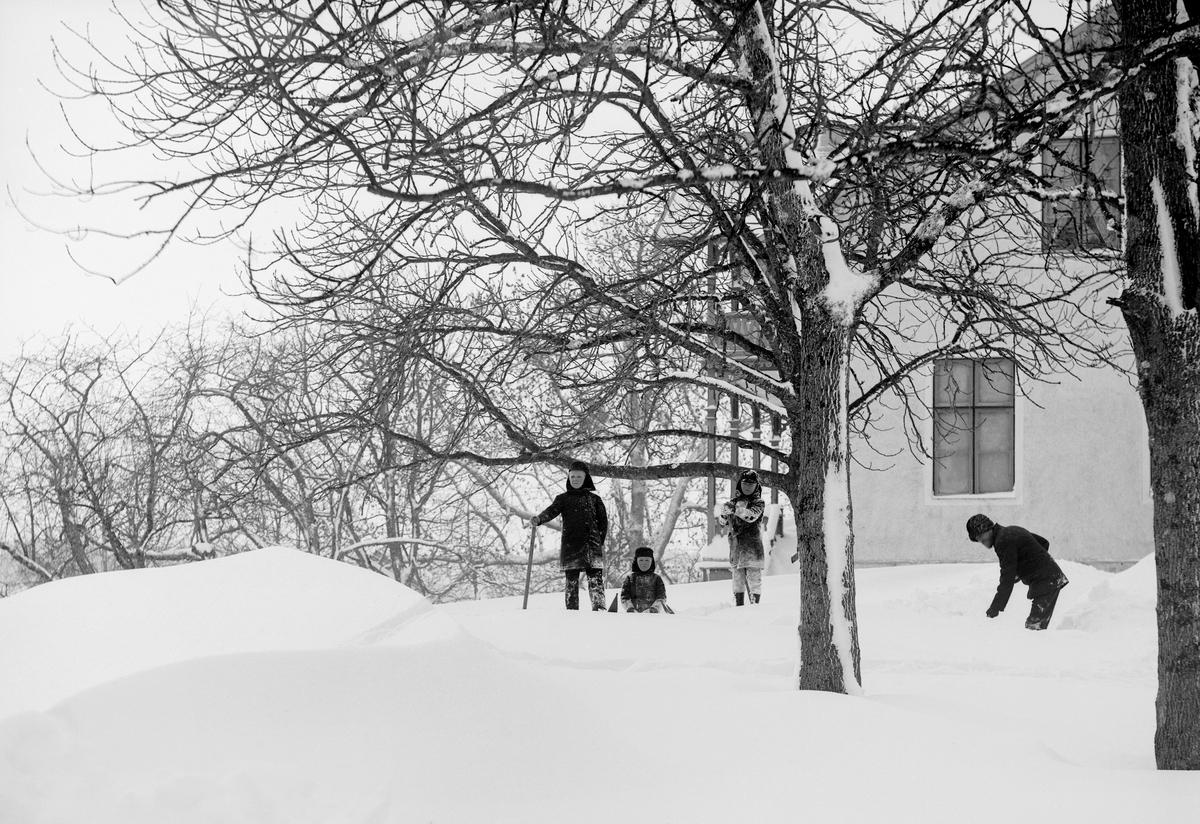 Bröderna Arne, Uno och Sigurd hjälper fadern Karl Johan Hallin med snöskottningen vid hemmet Ramsdal i Sankt Anna.