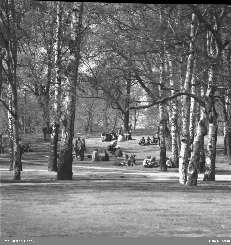 park, ungdom