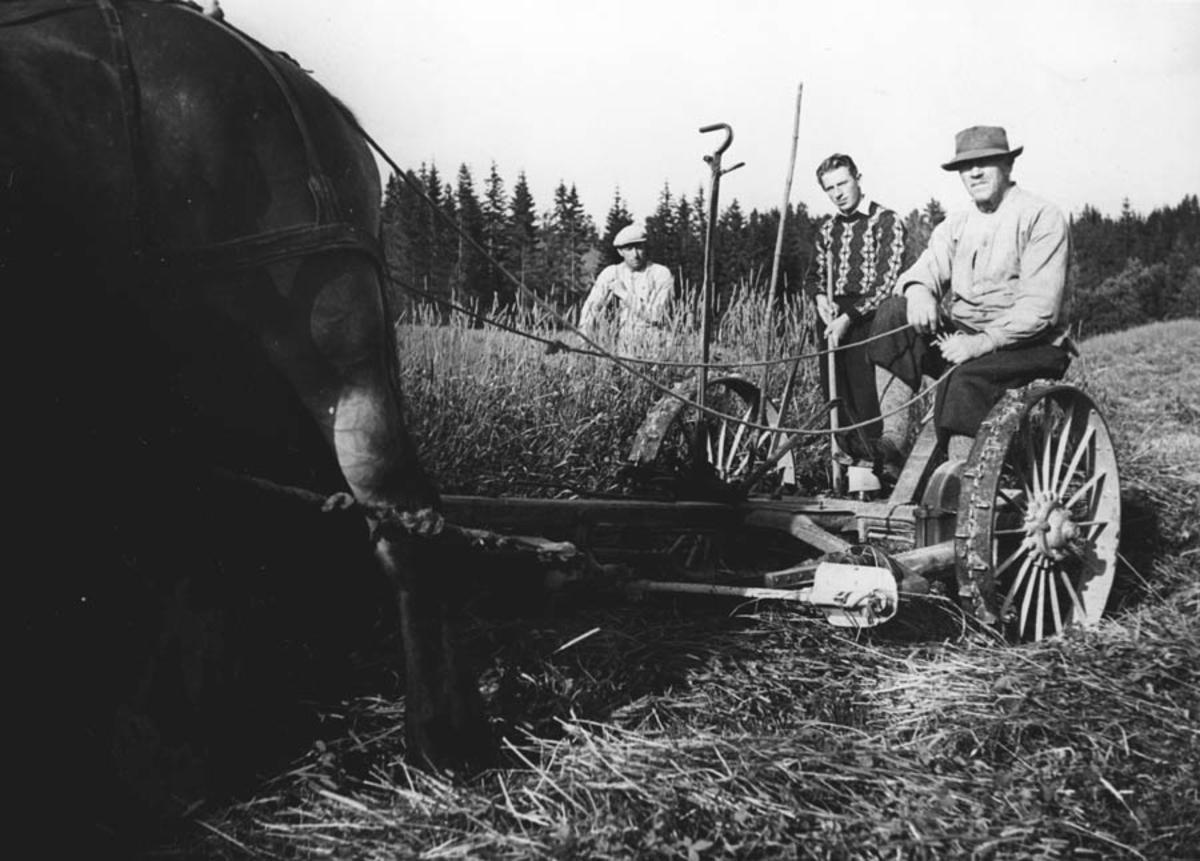 Jordbruk - slåttånd, slått med hest og slåmaskin.