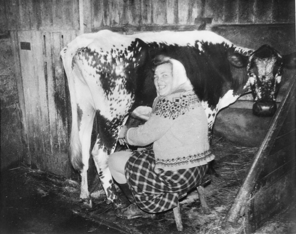 Elfrid Trøiterud og kua Krusgås